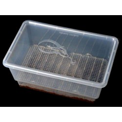 S.I.M. Incubation Container - XL (Squamata)
