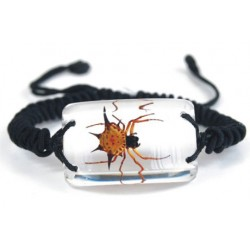 Bracelet - Spiny Spider (Clear)