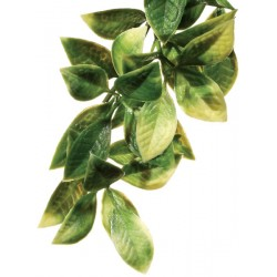 Jungle Plant - Mandarin (Exo Terra)