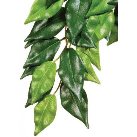 Ficus - SM (Exo Terra)