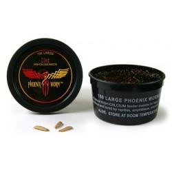 Wholesale Phoenix Worms