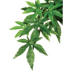 Jungle Plant - Abutilon (Exo Terra)