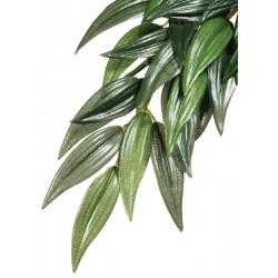 Jungle Plant - Ruscus (Exo Terra)