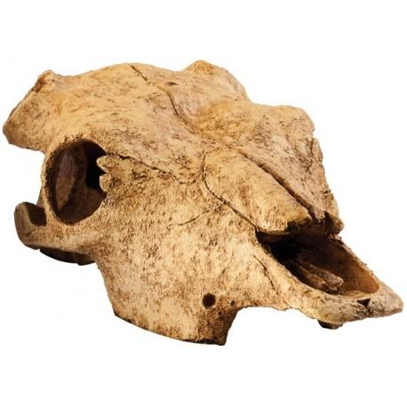 Skull - Buffalo (Exo Terra)