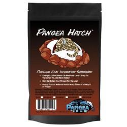 Pangea Hatch