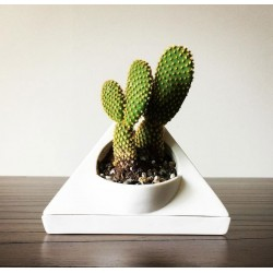 Triangle Succulent Plant Pot