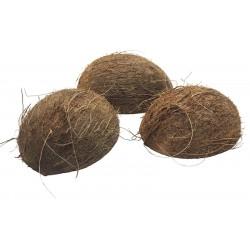 Coconut Shell Half w/ Fiber (RSC)