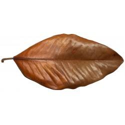 Magnolia Leaf - XL (RSC)