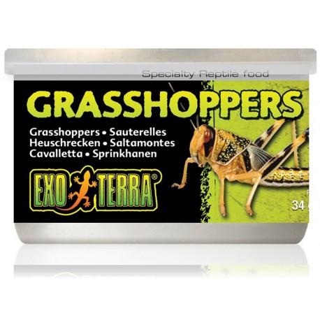 Grasshoppers (Exo Terra)