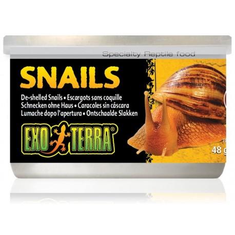 Snails (Exo Terra)