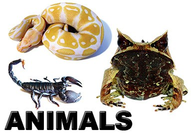 Reptile Supply Co - Wholesale Reptiles, Amphibians & Invertebrates