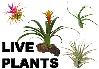 Reptile Supply Co - Wholesale Live Plants