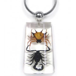 Keychain - Scorpion vs. Spider (Clear)