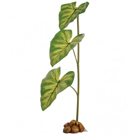 Dripper Plant - LG (Exo Terra)