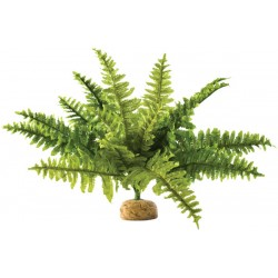 Boston Fern - MD (Exo Terra)