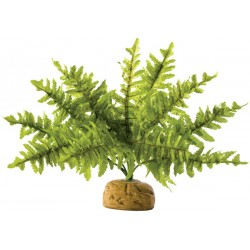 Boston Fern (Exo Terra)