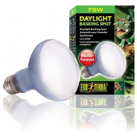 Daylight Basking Spot - 75w (Exo Terra)