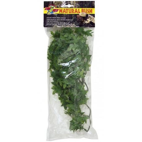 Congo Ivy - LG (Zoo Med)