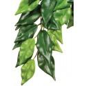 Jungle Plant - Ficus - SM (Exo Terra)