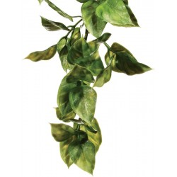 Jungle Plant - Amapallo - SM (Exo Terra)