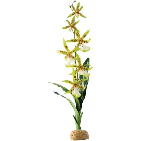 Spider Orchid (Exo Terra)