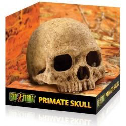 Skull - Primate (Exo Terra)