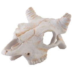 Skull - Buffalo - Mini (Exo Terra)