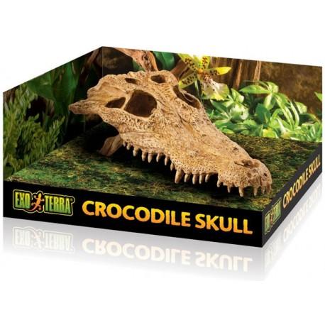 Skull - Crocodile (Exo Terra)