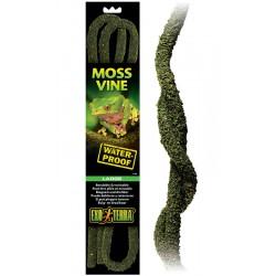 Moss Vine - LG (Exo Terra)