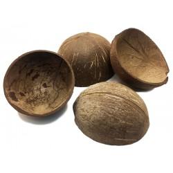 Coconut Shell Half (RSC)