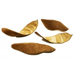 Curved Seed Pods (RSC)