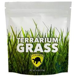 Terrarium Grass (Lugarti)