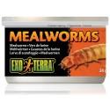 Mealworms (Exo Terra)