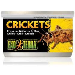 Crickets (Exo Terra)