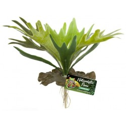 Staghorn Fern (Zoo Med)