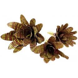 Bromeliad - Red Chestnut - SM (Lugarti)