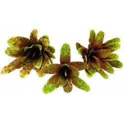 Bromeliad - Royal Pepper - LG (Lugarti)