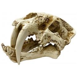 Skull - Saber-tooth - SM (Lugarti)